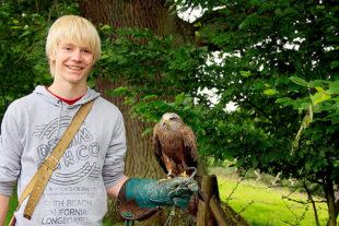 Falkner für einen Tag – dieses und viele andere Weihnachtsgeschenke gibt es im Tierpark Sababurg. Foto: nh