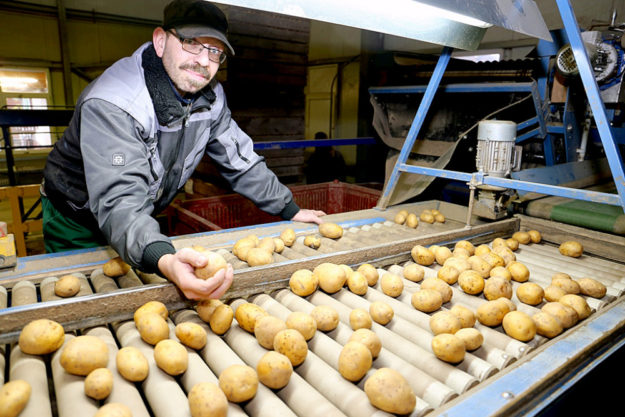 An der Sortiermaschine: Klient Heiko Pelz beim Verlesen der Kartoffeln. Foto: Hephata