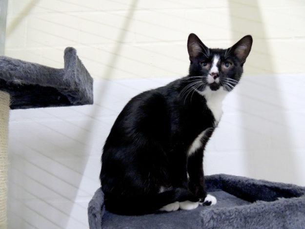 Ein Bild wie ein Kunstwerk aus Schattenwurf und würdevollem Kater. Winston hofft auf ein gutes Zuhause. Foto: Tierheim Beuern