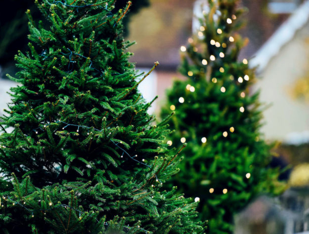 Die große Mehrzahl der Christbäume in deutschen Wohnstuben stammt aus Dänemark. Foto: Annie Spratt | Unsplash