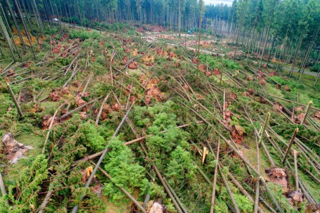 2018 war für den Wald und die Forstleute eine Herausforderung: HessenForst hatte rund 2,7 Mio. Festmeter Sturmwurfholz zu bewältigen. Foto: M. Delpho