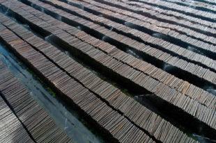 Die Wertholzplätze sind derzeit gut gefüllt – eine Folge von »Friederike«. Foto: M. Delpho