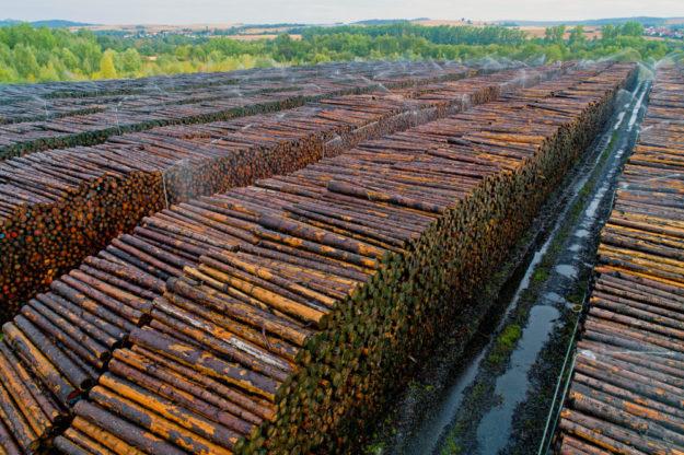 Nach dem Orkan sind die Nasslager von HessenForst deutlich gewachsen. Foto: M. Delpho