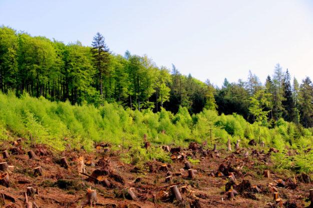 Nach dem Aufräumen steht die Wiederbewaldung an – Naturverjüngung hat hierbei zunächst Vorrang. Foto: F. Reinbold | HessenForst