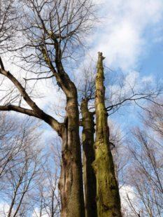Bäume zum Himmel. Foto: Hermann Müller, Wanfried