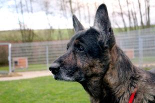 Zora sucht ein neues Zuhause mit Familienanschluss. Foto: Tierheim Beuern