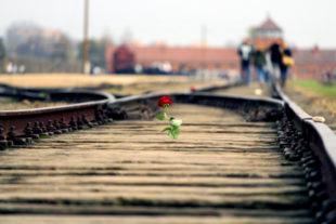 Heute ist das KZ Auschwitz-Birkenau eine wichtige Gedenkstätte. Auf den Schienen Richtung Eingangstor werden nach jüdischer Sitte oft Rosen und Steine zur Erinnerung an die ermordeten Mitmenschen abgelegt. Foto: Albert Laurence | unsplash