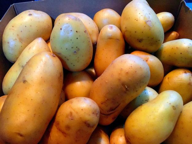Die Kartoffeln könnten teurer werden. Laut Destatis ist die Ernte so mager wie vor 30 Jahren. Foto: Schmidtkunz