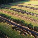 Lohn jahrzehntelanger Waldpflege: Edle Hölzer auf dem Wertholzplatz im Forstamt Jesberg.  Foto: M. Delpho