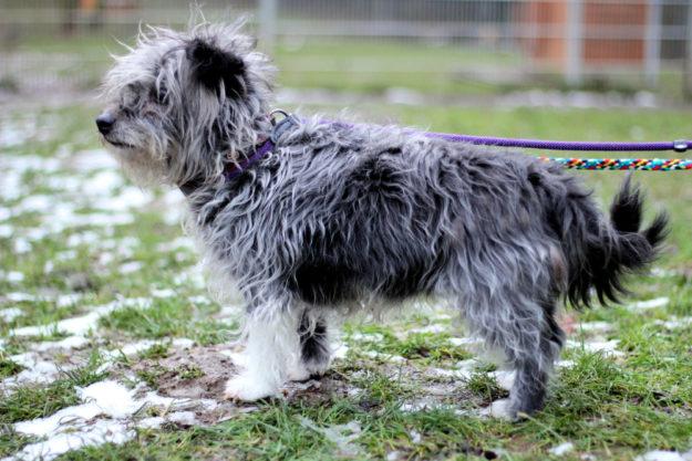 Ein neues Heim mit erfahrenen Hundehaltern und einem großen Garten wäre Josies Traum. Foto: nh