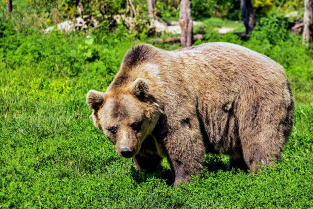 Bei den Bären im Wildpark Knüll hat sich dreifacher Nachwuchs eingestellt. Symbolfoto: Bergadder | pixabay