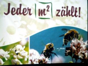 Beim Erhalt und der Erweiterung natürlicher Lebensräume für Insekten und Vögel zählt jeder Quadratmeter. Foto: Werkmeister