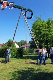 Gemeinsam mit der CDU wird der größte Maibaum im Landkreis aufgestellt. Foto: nh