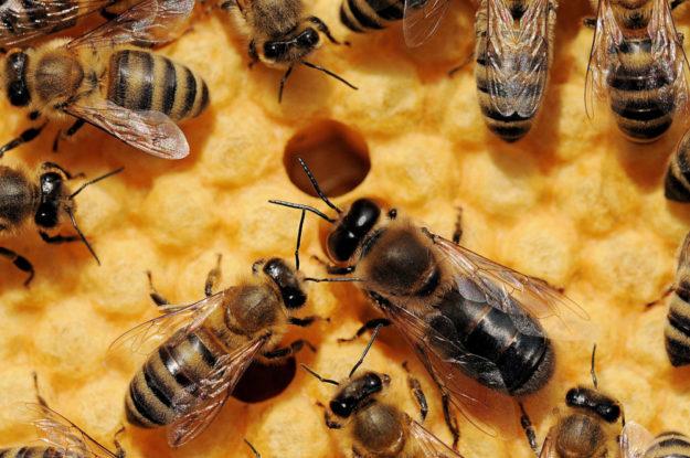 Für den 3. Mai lädt der Wildpark Knüll zum »bauen und pflanzen für Bienen« ein. Foto: nh