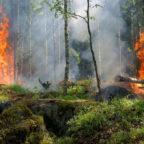 Das Umweltministerium warnt vor einer hohen Waldbrandgefahr in Hessens Wäldern. Symbolfoto: Ylvers | Pixabay