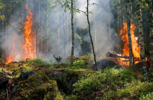 Das Umweltministerium warnt vor einer erhöhten Waldbrandgefahrt über die Osterfeiertage. Symbolfoto: Ylvers | Pixabay