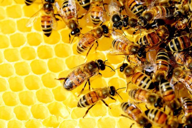 Das Bieneninstitut Kirchhain lädt zum Tag der offenen Tür ein. Foto: PollyDot | pixabay