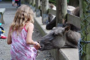 Eine der Stärken des Wildpark Knüll ist die besondere Nähe der Besucher zu den Tieren. Foto: nh