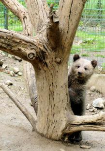 Ab sofort ist für die Jungbären das Klettertraining angesagt.  Foto: Schwalm-Eder-Kreis