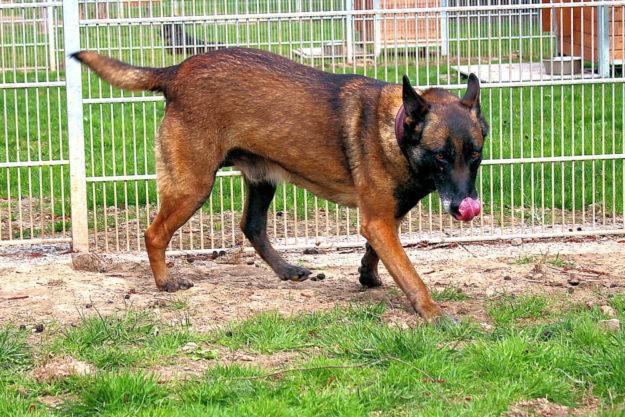 Branca zeigt sich lernfähig und verschmust. Foto: Tierheim Beuern