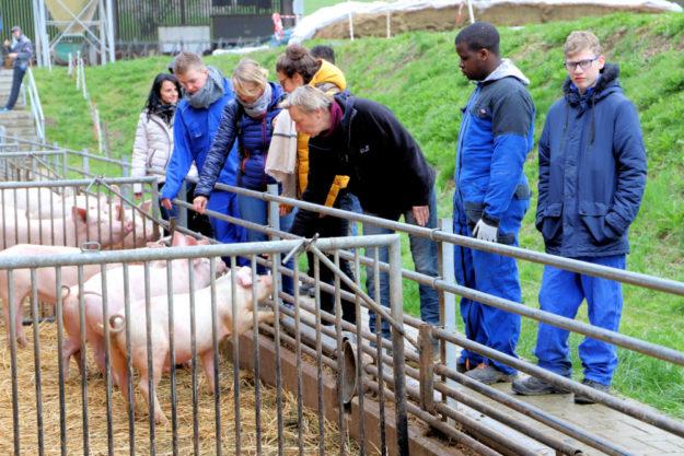 Beim Frankreich-Austausch der Hermann-Schuchard-Schule, ein Standort der Hephata-Förderschule, gewannen die Jugendlichen auch Einblicke in die landwirtschaftliche Praxis. Foto: Hephata