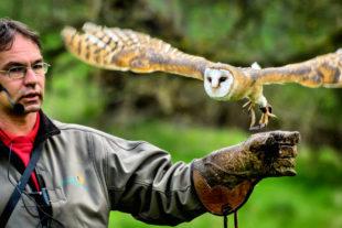 Schleiereule Lea mit Rainer Cremer. Foto: Maik Miotke   Tierpark Sababurg