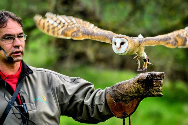 Schleiereule Lea mit Rainer Cremer. Foto: Maik Miotke | Tierpark Sababurg