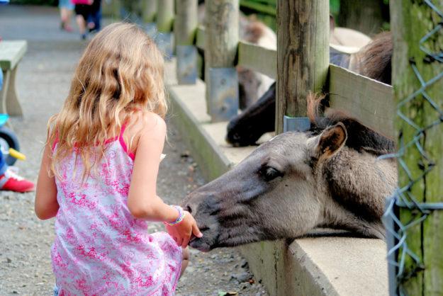 Um Tieren einmal nahe zu kommen, stehen zwei Sommerferien-Termine im Juli zur Verfügung. Foto: Wildpark Knüll