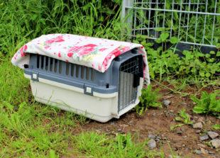 In diesem Katzenkorb wurde Fenja eiskalt neben dem Tierheimgelände ausgesetzt. Foto: Tierheim
