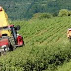 Um während der Feldarbeit Unfälle mit Tieren zu vermeiden, spürte eine Drohne auf, was sich im »Unterholz« verbarg. Foto: Andrea Imhäuser | LLH