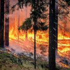 Vor einer akuten Brandgefahr in Hessens Wäldern warnt aktuell das Umweltministerium. Symbolfoto: skeeze | Pixabay