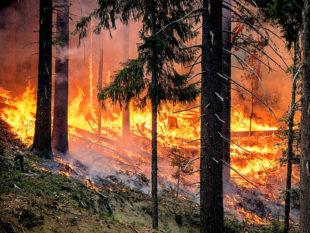 Vor einer akuten Brandgefahr in Hessens Wäldern warnt aktuell das Umweltministerium. Symbolfoto: skeeze   Pixabay
