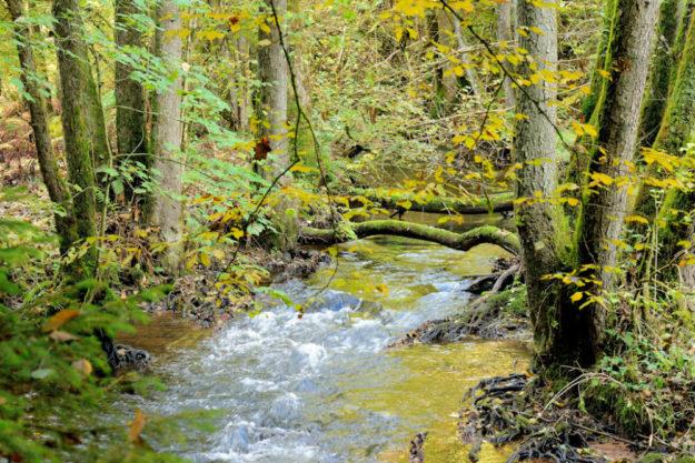 Bäche im Wald – die Renaturierung von Bachläufen und Durchlässen wird von HessenForst so naturnah wie möglich durchgeführt. Foto: A. Schilling | HessenForst