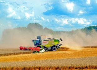 Wetterbedingt rechnet der Deutsche Bauernverband schon jetzt mit Ernteeinbußen. Foto: Anemone123 | Pixabay