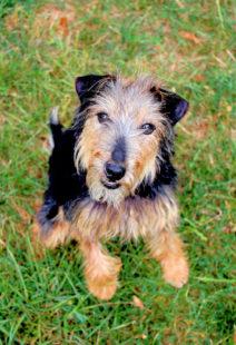 Bonnie liebt ihre Freiheit im Garten. Foto: nh