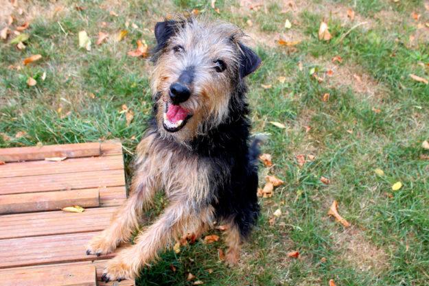 Bonnie ist nach einem vermeintlichen Vermittlungserfolg doch wieder zurück im Tierheim. Nun sucht sie erneut ein Zuhause in dem sie zeigen kann, was für eine gute Gefährtin sie sein kann. Foto: nh