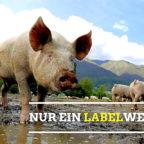Kann ein Label auf Verpackungen das Tierwohl sichern? Bündnis 90/Die Grünen sind skeptisch. Foto: nh