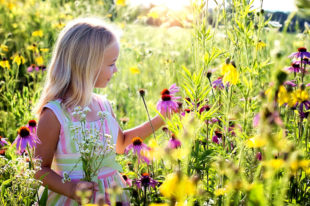 Blühflächen sind hübsch anzusehen und dienen zudem einen wichtigen ökologischen Zweck. Foto: nh