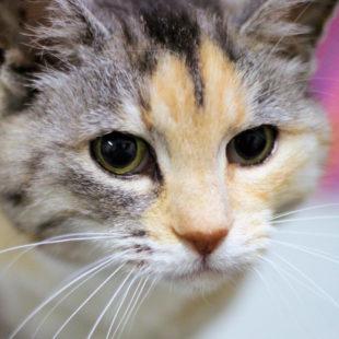 Typisch Katze: Neugierig und eigenwillig. Foto: nh