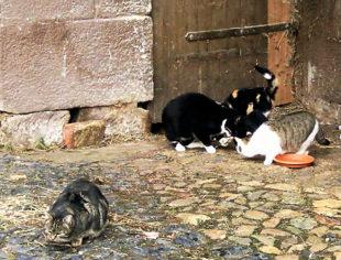 Die Guxhagener Katzenhilfe hat ihre Aufnahmekapazität erreicht. Nicht zueltzt durch die Urlaubszeit, in der immer wieder Welpen ausgesetzt werden. Foto: nh