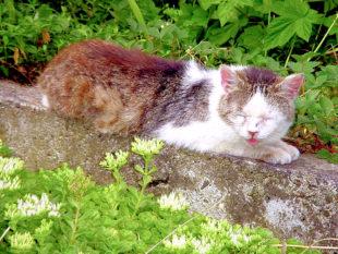 Streunende Katzen sind häufig von Krankheiten gezeichnet. Foto: nh