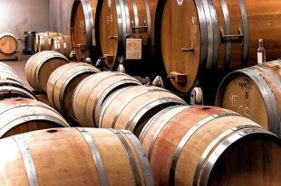 Eine der besten Weinlesen der vergangenen 16 Jahre und moderat gestiegene Preise sind die Vorteile, die die Weinbauern aus der Sommerhitze ziehen. Foto: Leo Hau | Pixabay