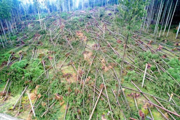 Sturm, Dürre, Hitze, Käfer und Pilze sorgten für riesige Kahlflächen im Wald. HessenForst will sie mit dem Programm »Mischwald für morgen« klimastabil bewalden. Foto: M. Delpho