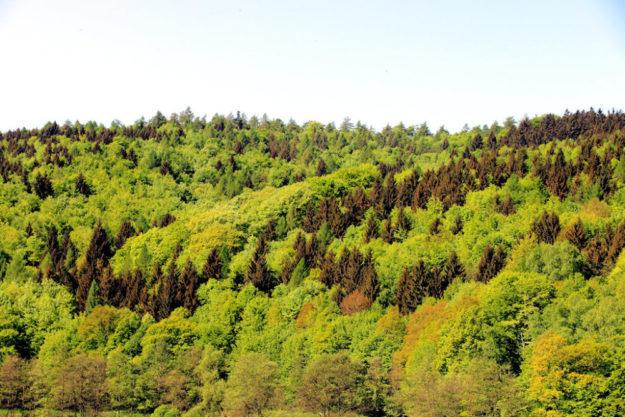 Mischwald ist die Zukunft: Der Baumartenmix verringert das Risiko der Klimaextreme und sorgt für ein stabiles Waldökosystem. Foto: F. Reinbold | HessenForst
