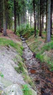 Mit dem Programm »100 Wilde Bäche für Hessen« sollen modellhaft 100 Bäche mit Landesbeihilfe renaturiert werden. Foto: Norbert Graube | Pixabay