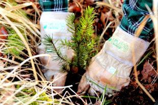Aktiv für den Mischwald von morgen – HessenForst wird im Landeswald über 20 Millionen neue Bäume pflanzen. Foto: M. Mahrenholz | HessenForst