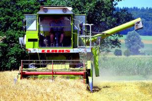 Angesichts der einschneidenden Wetterdaten hat der Deutsche Bauernverband seine Ernteprognose 2019 nach unten korrigiert. Foto: Ulrike Leone | Pixabay
