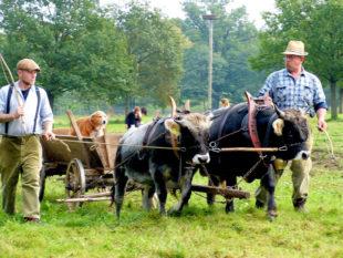 Beim Herbstfest wird Erntearbeit aus der Guten alten Zeit gezeigt. Foto: Tierpark Sababurg