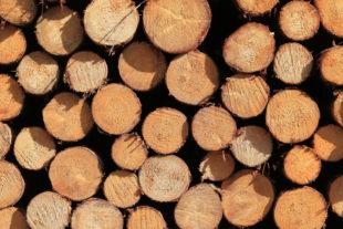 Brennholz wärmt klimaneutral – und ist jetzt bei HessenForst online erhältlich. Foto: M. Mahrenholz | HessenForst