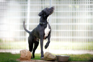 Bei Filou ist der Name Programm: Der aufgeweckte Hund kann sich selbst die Türen öffnen. Foto: nh